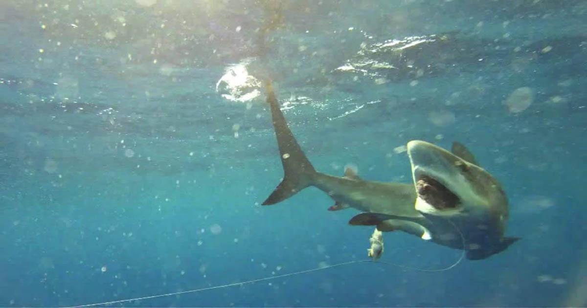 видео про акул