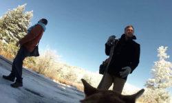 Видео: На свадьбе в качестве оператора использовали собаку!